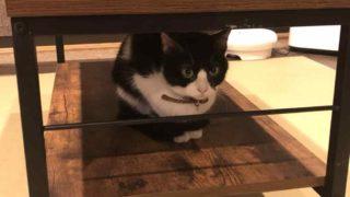 長崎 猫カフェ デート