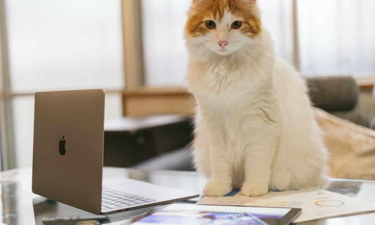猫,100記事,ブログ,目標,1万pv