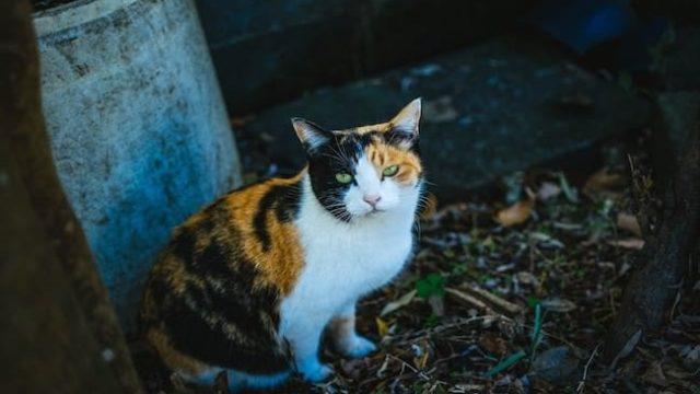 猫をかぶるブログ