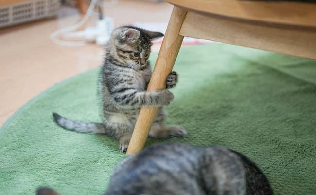 猫をかぶるブログ,長崎,ブロガー