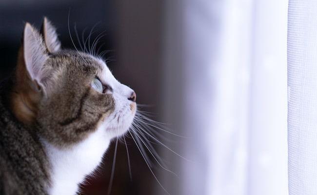 世界,猫が,消えたなら,失って,分かる,価値,大きさ